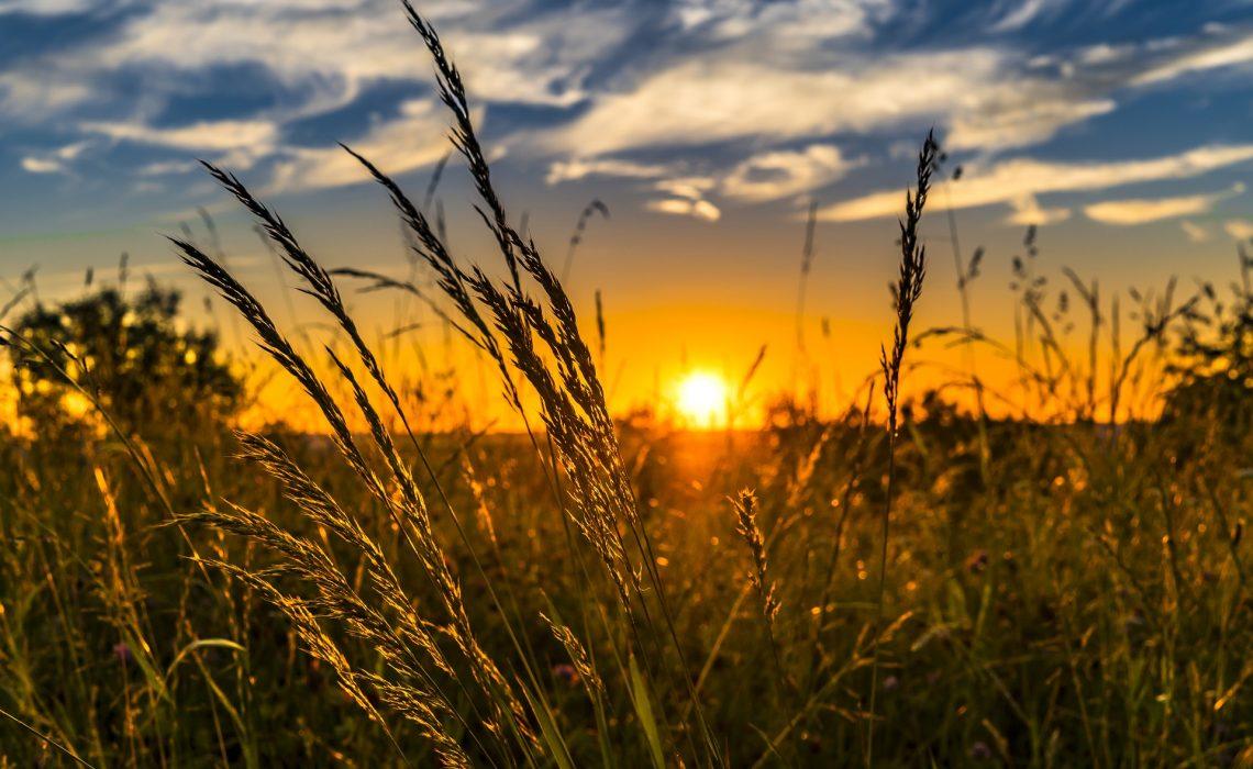 Sonne hilft bei Psoriasis