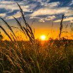Sonne macht glücklich - und hilft bei Psoriasis