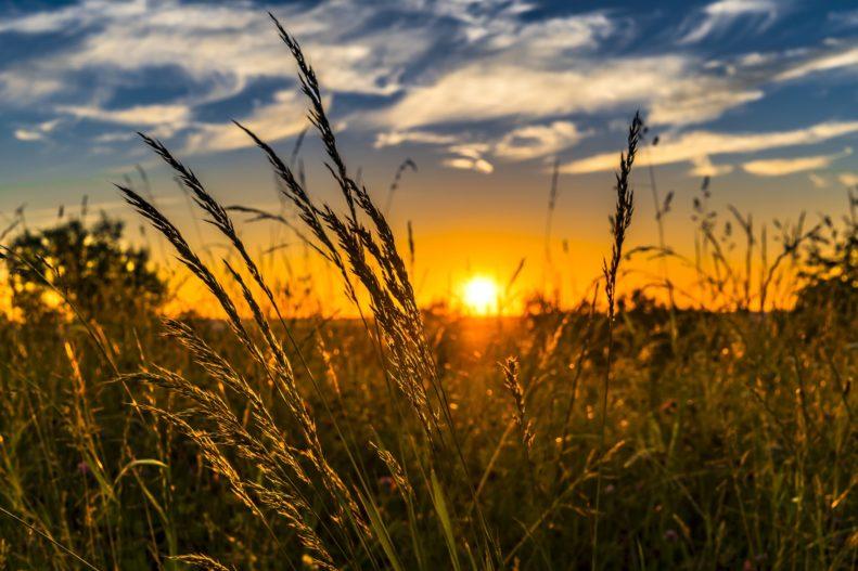 Sonne macht glücklich – und hilft bei Psoriasis