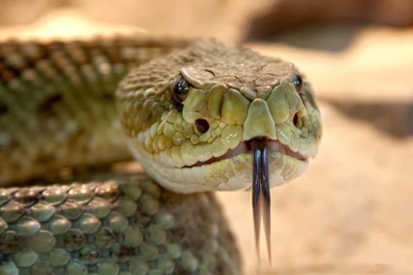 Schlangengift gegen Psoriasis – die eher ungewöhnliche Behandlungsmethode