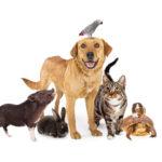 Haustier bei Schuppenflechte? Schuppenflechte bei Haustieren? – Ein Blick auf das Thema Haustier