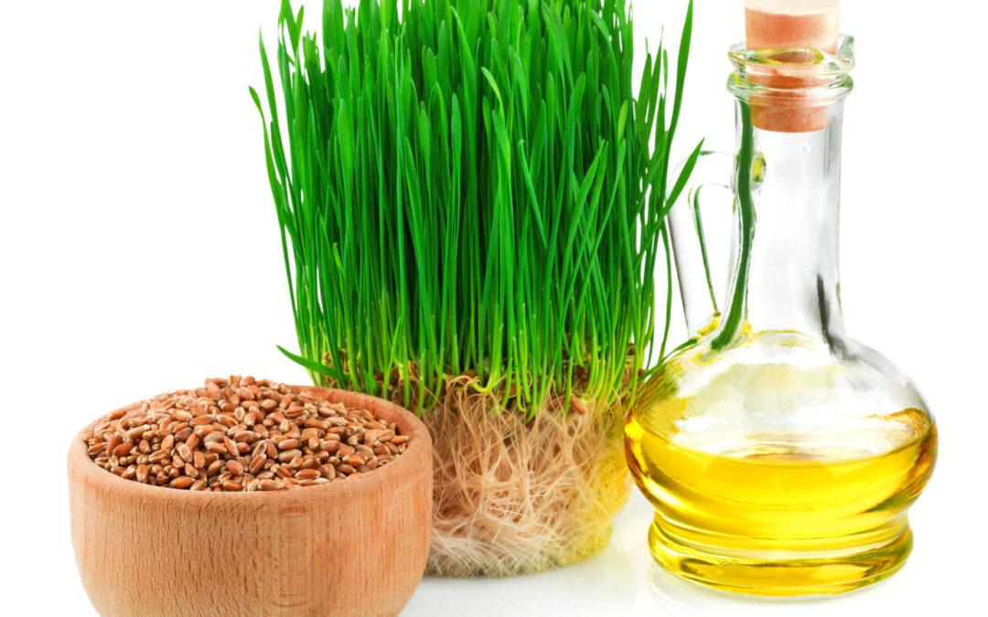 Weizenkeimöl, Weizensaat und Weizensamen