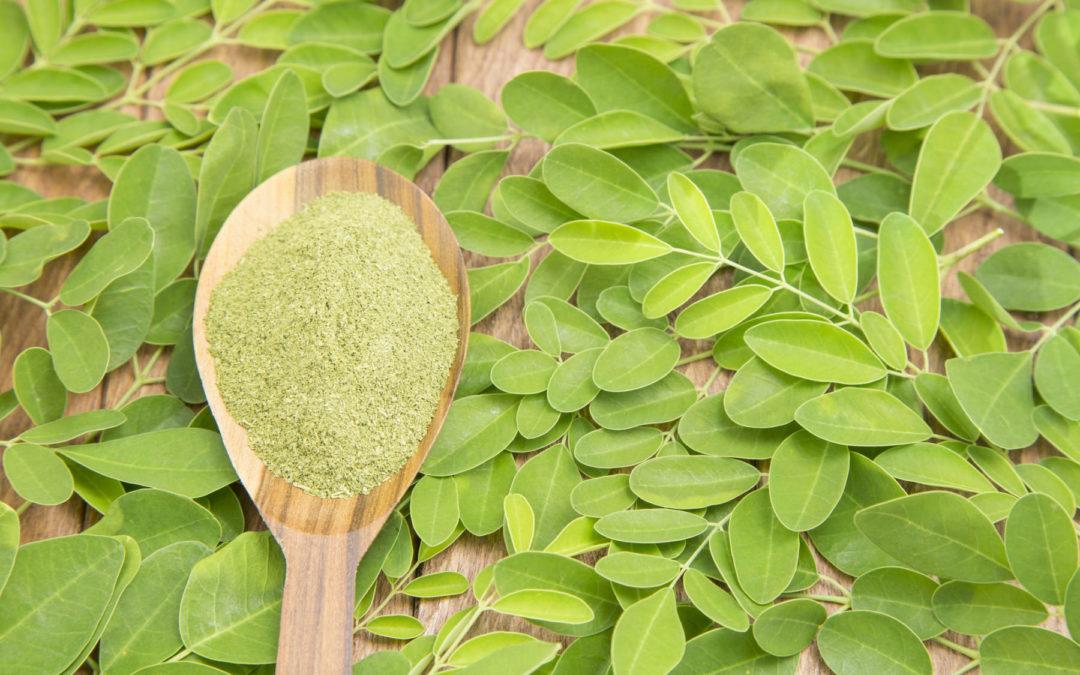 Moringa – Wunderbaum mit Wunderwirkung